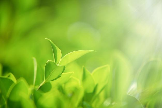 Zbliżenie natury zielonych liści na niewyraźnym zielonym tle pod porannym światłem słonecznym z bokeh