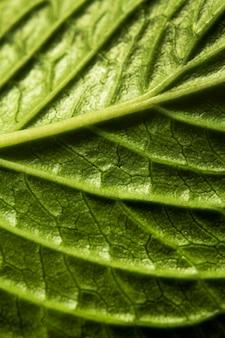 Zbliżenie nerwów zielonych liści