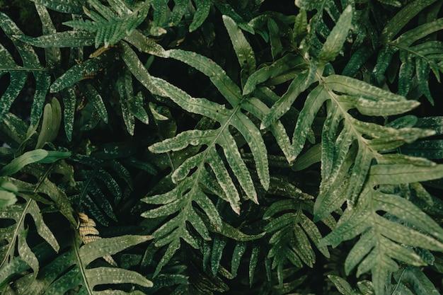 Zbliżenie niektórych zielonych roślin z super teksturą i głębokimi cieniami z miejsca na kopię