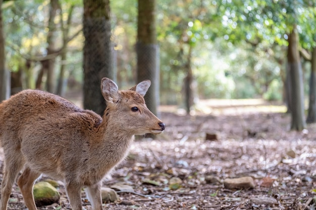Zbliżenie obraz dzikiego jelenia w parku