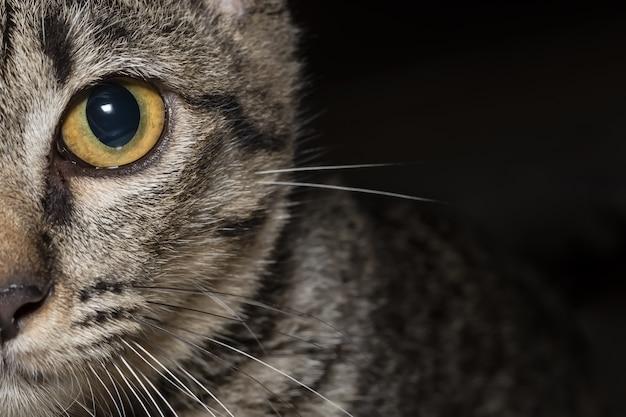 Zbliżenie oczu kota