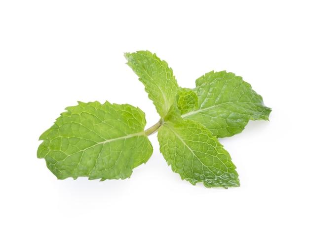 Zbliżenie odosobneni świezi mięty liście na białym tle. mięta miętowa lub mięta pieprzowa jest ziołowa stosowana do aromatyzowania lodów cukierków owocowych konserwuje napoje alkoholowe guma do żucia i pasta do zębów.