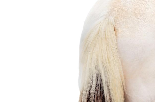 Zbliżenie ogon konia na białym tle w ścieżce przycinającej