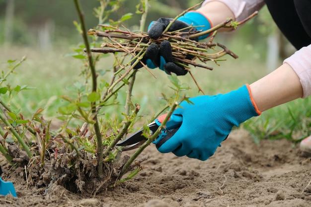 Zbliżenie ogrodnik ręka w rękawice ochronne z ogrodowym sekatorem
