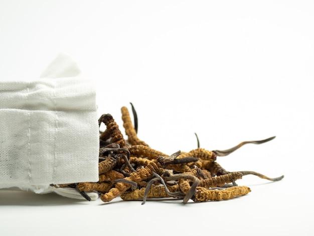 Zbliżenie ophiocordyceps sinensis lub pieczarkowy cordyceps w białej sukiennej torbie na odosobnionym tle.
