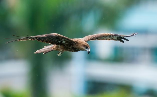 Zbliżenie orła lecącego po niebie z szeroko otwartymi skrzydłami
