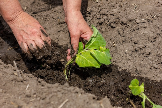 Zbliżenie osoby dbające o rośliny
