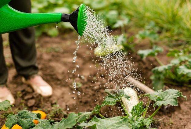 Zbliżenie osoby podlewania upraw