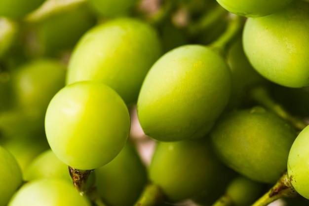 Zbliżenie owoców śliwek mirabelkowych