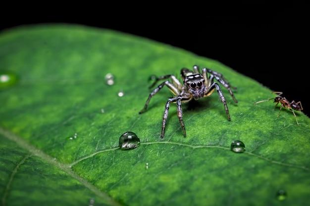 Zbliżenie: pająk na liściu