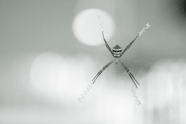 Zbliżenie pająk na pajęczynie