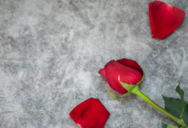 Zbliżenie piękna czerwona róża kwiat na białym betonowym tablewith przestrzeni kopii. używając jako flory natura i miłość, koncepcja tapety walentynkowej