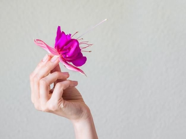 Zbliżenie piękna kobiety ręka z purpura kwiatem