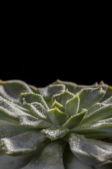 Zbliżenie: piękna zielona roślina