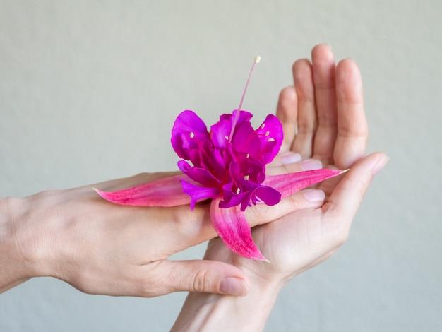 Zbliżenie piękne kobiet ręki z purpurowym kwiatem