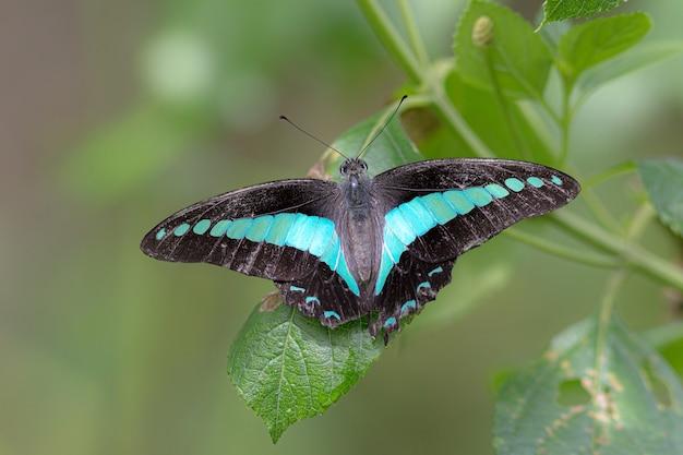 Zbliżenie pięknego motyla siedzącego na liściu z rozmytym tłem