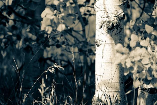 Zbliżenie piękny drzewo w lesie