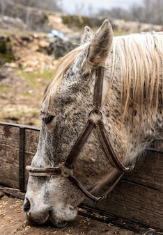 Zbliżenie piękny koń jedzenie