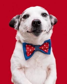 Zbliżenie: piękny pies z muszką