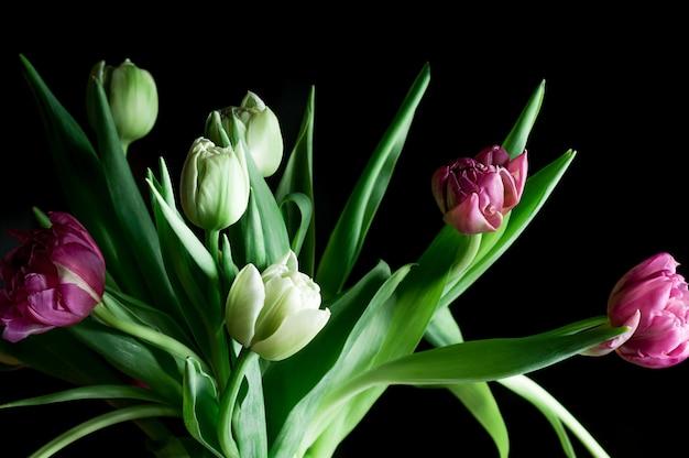 Zbliżenie piękny tulipan kwitnie ciemnego tło