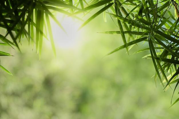 Zbliżenie piękny widok natury zieleni bambusowy liść na zieleni zamazywał tło z światłem słonecznym i copyspace.