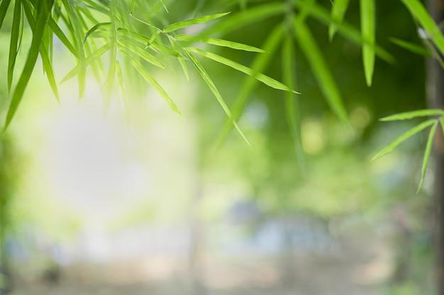 Zbliżenie piękny widok natury zieleni bambusowy liść na zieleni zamazywał tło z światłem słonecznym i copyspace