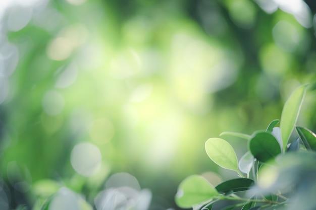 Zbliżenie piękny widok natury zielony liść na zieleni niewyraźne tło z działaniem promieni słonecznych