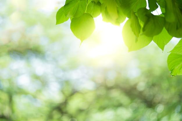 Zbliżenie piękny widok zielony liść natura na zieleni niewyraźne tło.