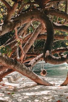 Zbliżenie pięknych krzywych drzew zebranych razem i wykonanych w piękną sztukę