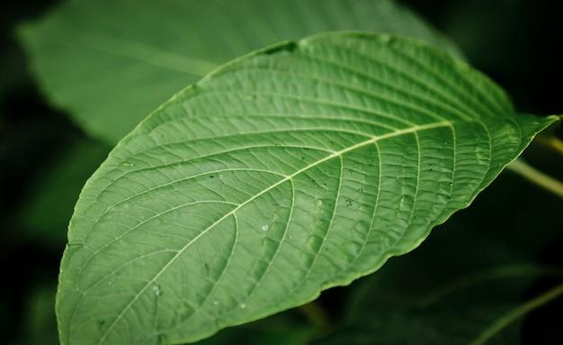 Zbliżenie pięknych zielonych liści