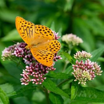 Zbliżenie pionowe pomarańczowego motyla siedzącego na kwiatku