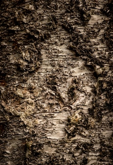 Zbliżenie pionowe strzał tekstury drzewa
