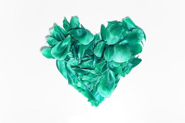 Zbliżenie: płatki kwiatów w kształcie serca, aqua menthe koloru, na białym tle.