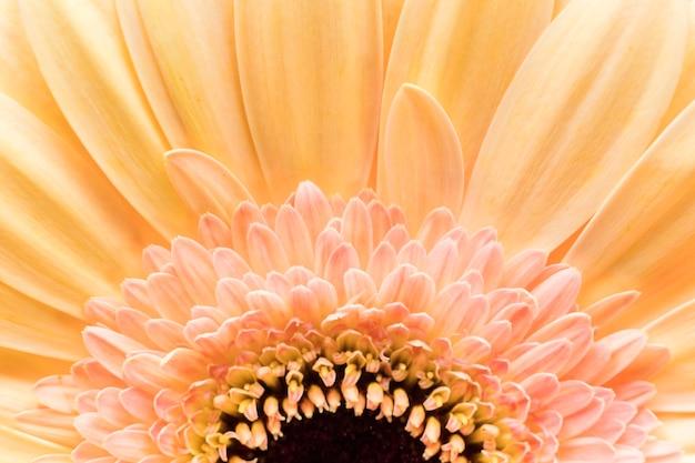 Zbliżenie płatków kwiatu