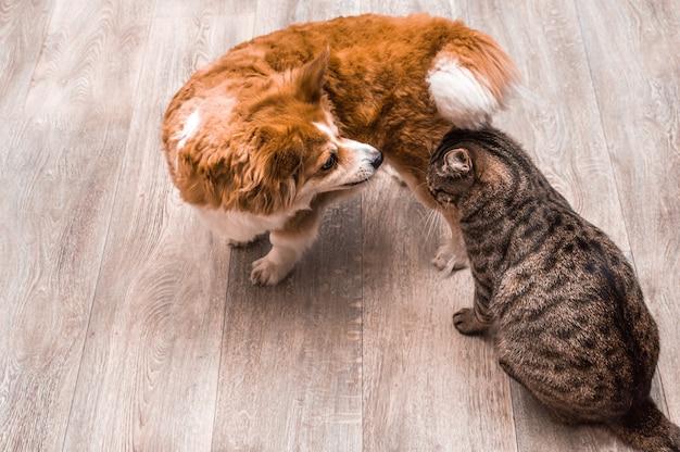 Zbliżenie portret kota i psa. płaskie szare tło