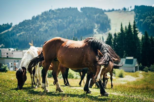 Zbliżenie portret pięknych dzikich koni pasących się na łące w górach w słoneczny dzień