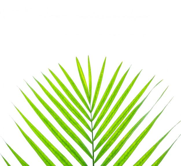 Zbliżenie powierzchnia zielony liść drzewko palmowe odizolowywa na bielu