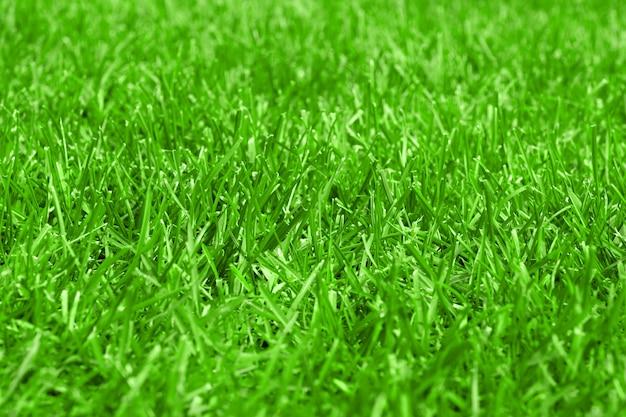 Zbliżenie przyciętego trawnika. zielone boisko do piłki nożnej