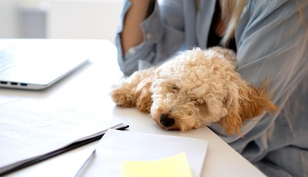 Zbliżenie psa śpiącego na biurku