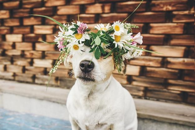 Zbliżenie: psa z wieńcem kwiatów w letni dzień