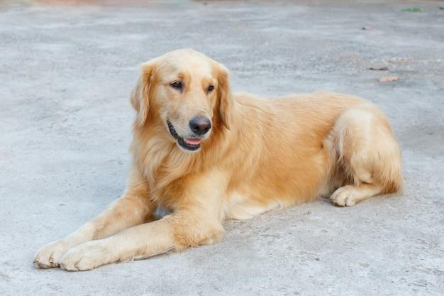 Zbliżenie psa zwierzaka