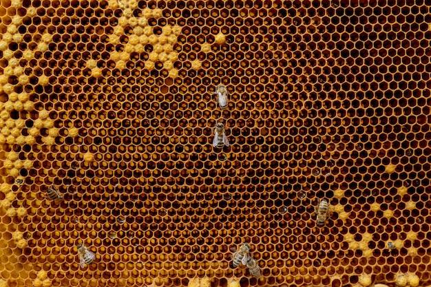 Zbliżenie pszczół na plaster miodu w pasiece