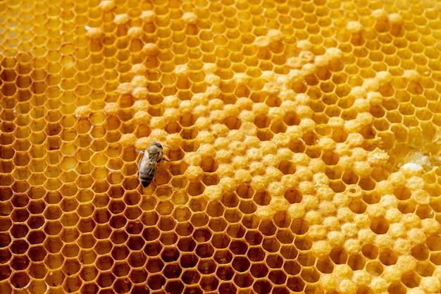 Zbliżenie pszczoły na honeycomb w pasiece. selektywna ostrość