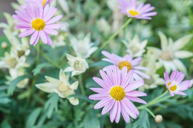 Zbliżenie purpurowy kwiat w ogrodowym textured tle
