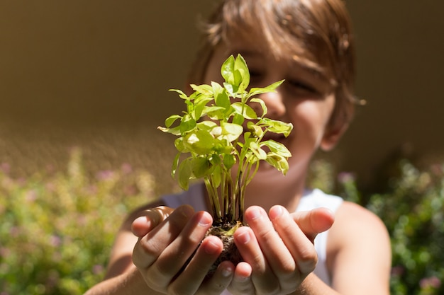 Zbliżenie ręka dziecka mienia basilu rozsada przygotowywająca przeszczepiająca. zielone tło