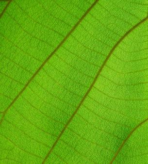 Zbliżenie rogu liść wzór tło zielone liście natura wybierz konkretną ostrość