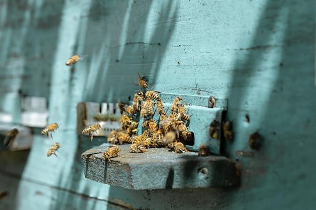 Zbliżenie roju pszczół na drewnianym ulu w pasiece.