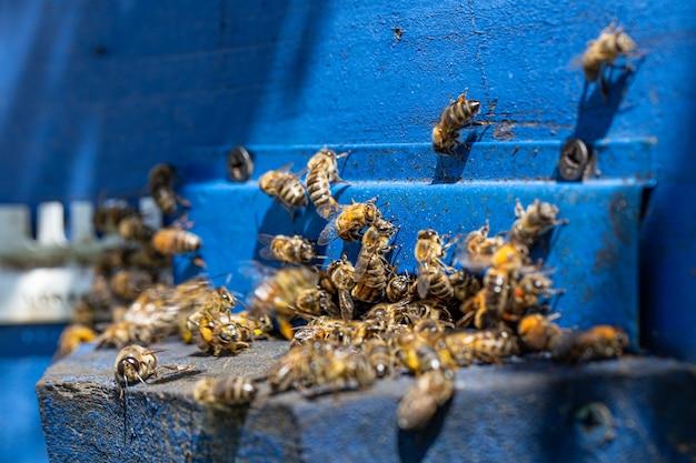 Zbliżenie roju pszczół na drewnianym ulu w pasiece