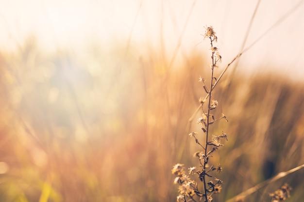 Zbliżenie roślin przed niewyraźne tło