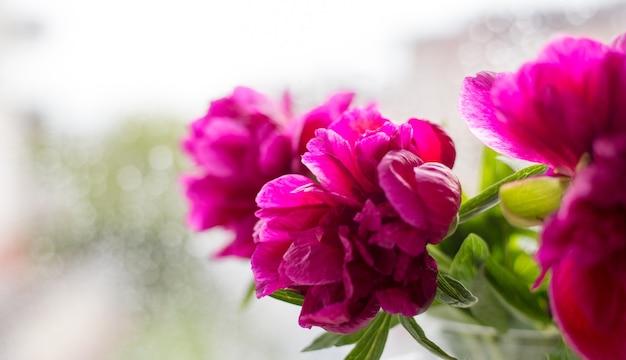 Zbliżenie różowe piwonie w szklanym wazonie przed oknem. koncepcja kwiatowy sklep. piękny bukiet cięty. dostawa kwiatów, baner